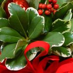 Preserving Holiday Greenery